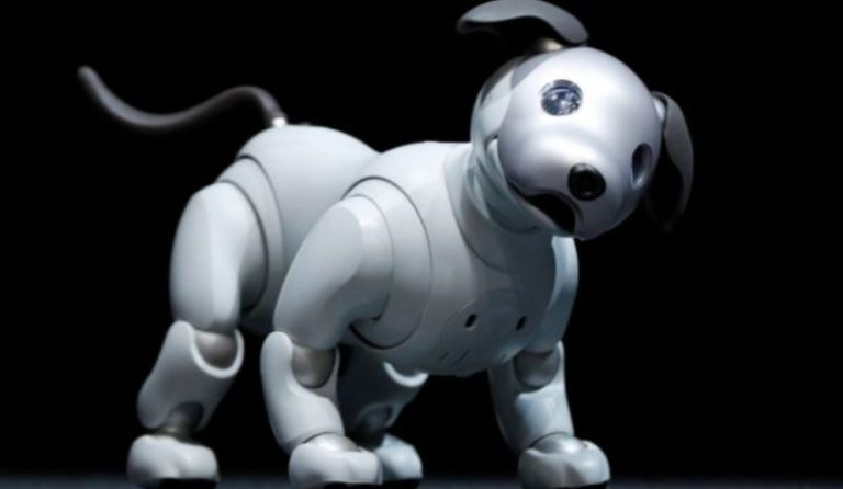 Best Robot Dog